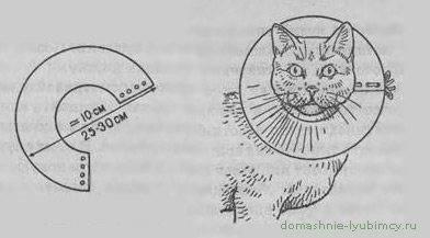 Воротник для кошки: особенности, выбор, изготовление и применение