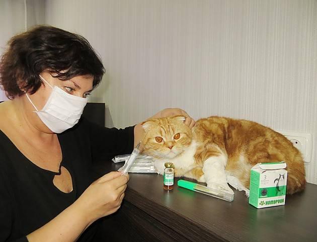 Кот чихает и кашляет чем лечить - муркин дом
