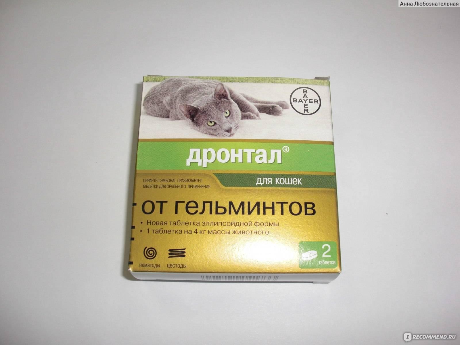 Как выбрать для кошки хороший препарат от глистов?   мир кошек обзор лучших препаратов от глистов для кошек   мир кошек