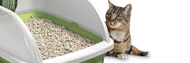 Закрытые туалеты для кошек и котов: описание, выбор и использование