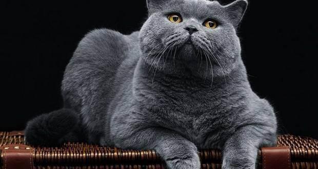 Перевод кошки из натуралки на корм - возможно ли???