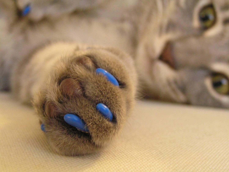 Как кошке подстричь когти в домашних условиях: правила безопасности для кота и хозяина, особенности для котят, полезные видео