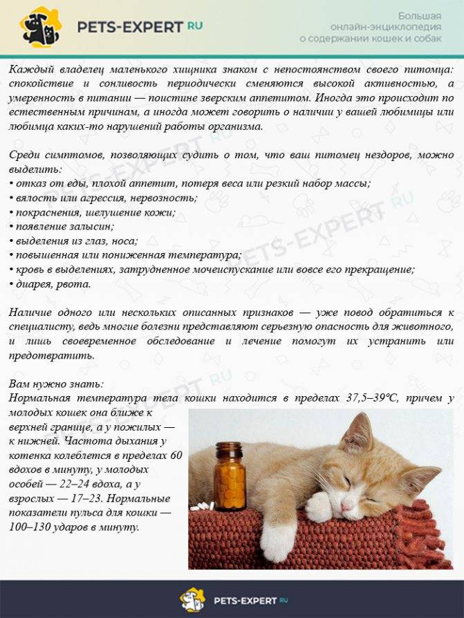 Как лечить кошку от простуды советы ветеринара