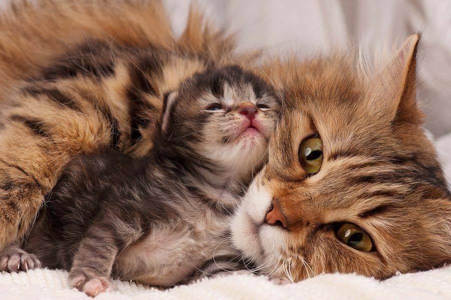 Роды у кошки: что нужно знать и уметь