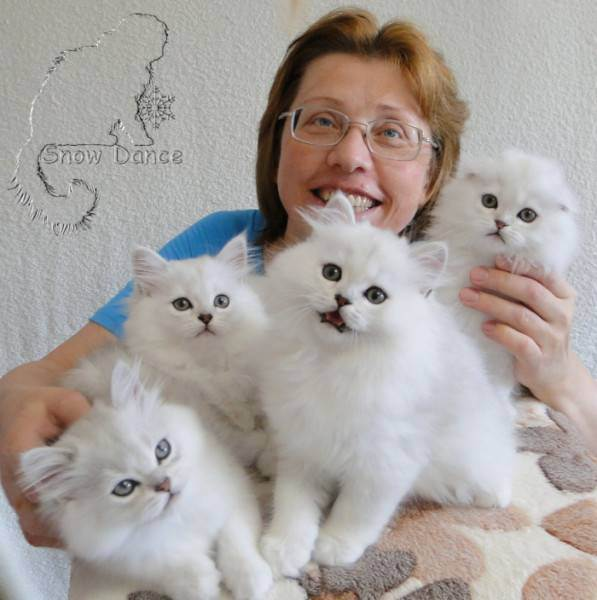 Разведение породистых кошек как бизнес