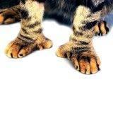 Сколько пальцев у кошки: на задних лапах, на передних лапах, что считать нормой?