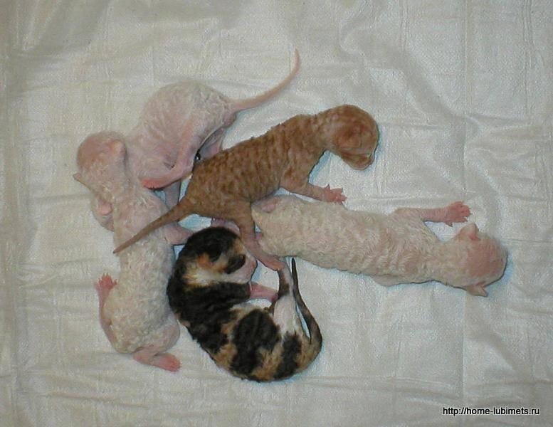 Уход за котёнком без кошки в домашних условиях