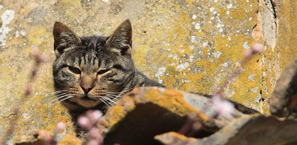 Зоонозы: болезни, общие для кошки и человека