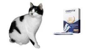 Как давать смекту коту при поносе - oozoo.ru