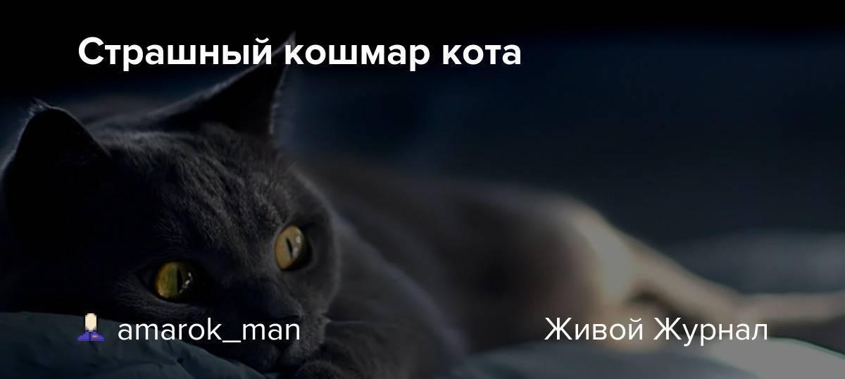 Снятся ли кошкам кошмары...