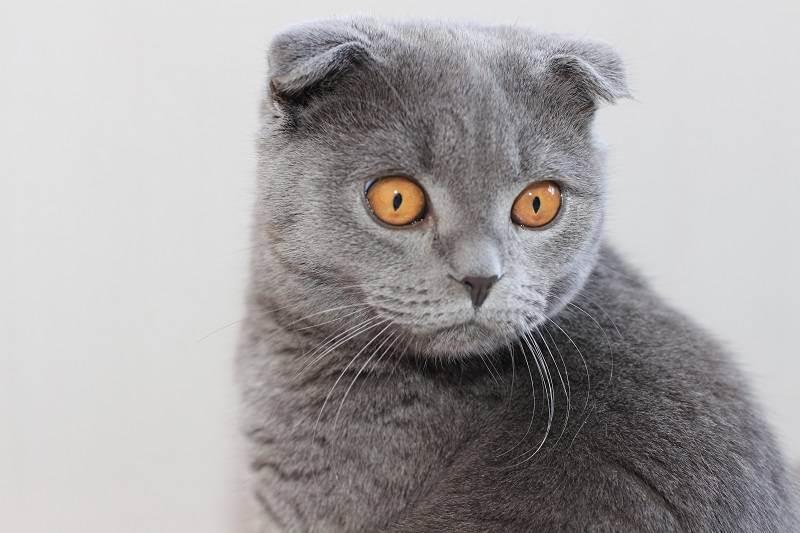 Как правильно воспитывать котенка, чтобы он был ласковым и спокойным, можно ли воспитать взрослого кота или кошку?