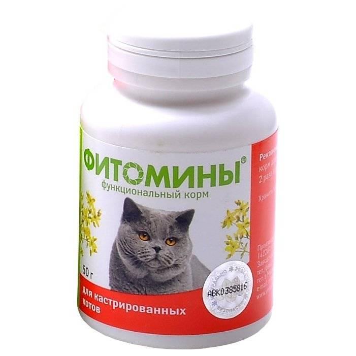 Витамины для британской беременной кошки
