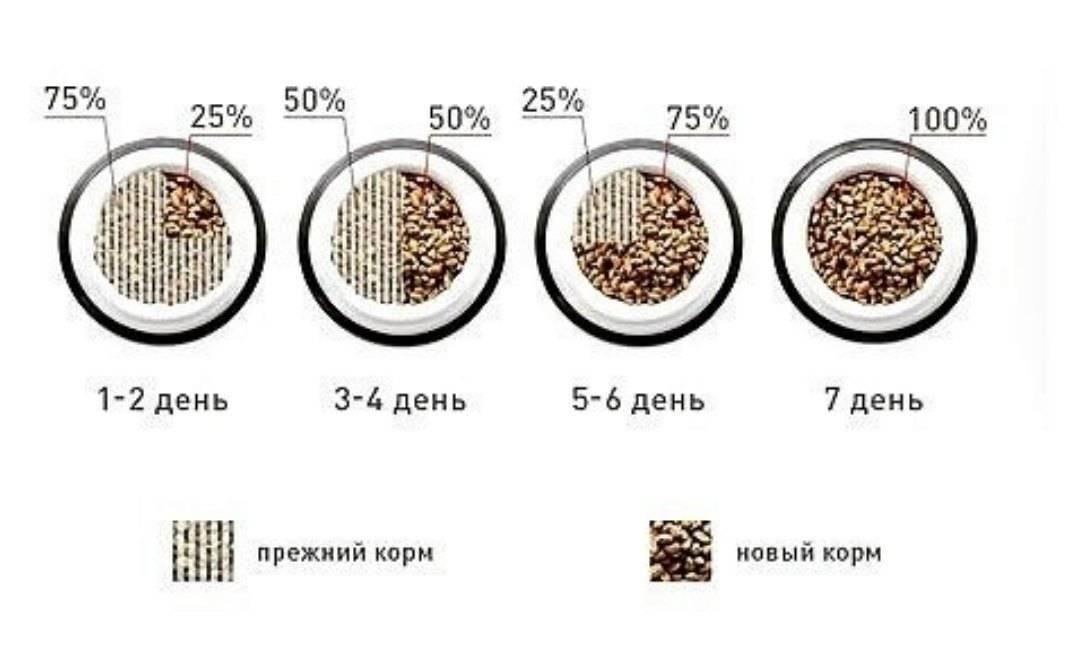 Чем лучше кормить котенка: натуралкой или кормом?