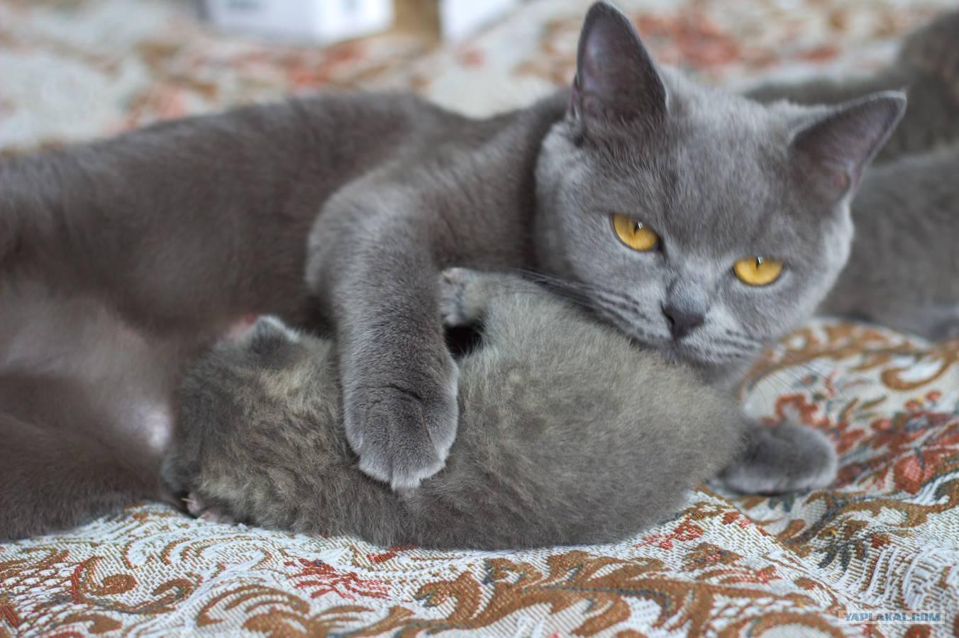 Чем кормить котенка в 3 месяца? | рутвет - найдёт ответ!