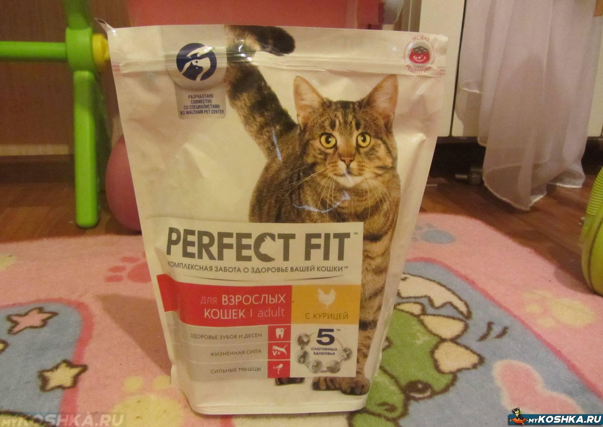 Кот перестал есть сухой корм — исправляем ситуацию