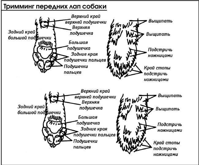 Сколько у кошки и котов пальцев: норма и отклонения, особенности