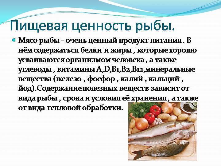 Почему котам нельзя рыбу? важно знать причины