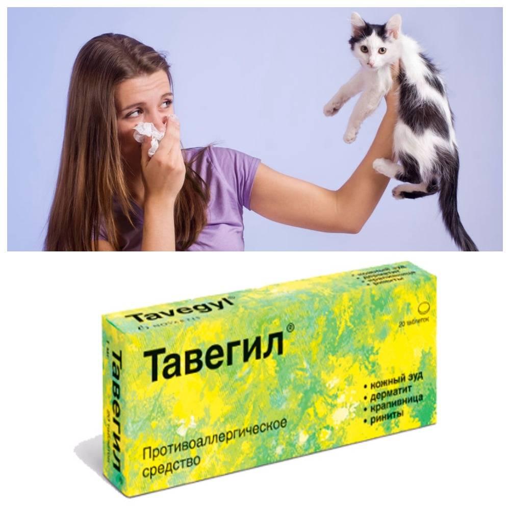 Кормление кошек при аллергии