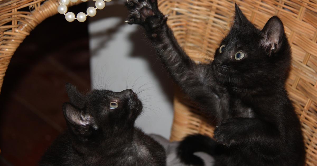 Что нужно знать, если вы решили завести кота