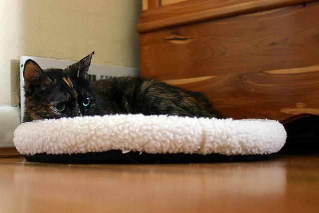 Кошку рвет слюной с белой пеной