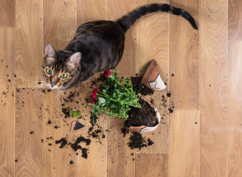 Кошка в доме. партнер или обуза?