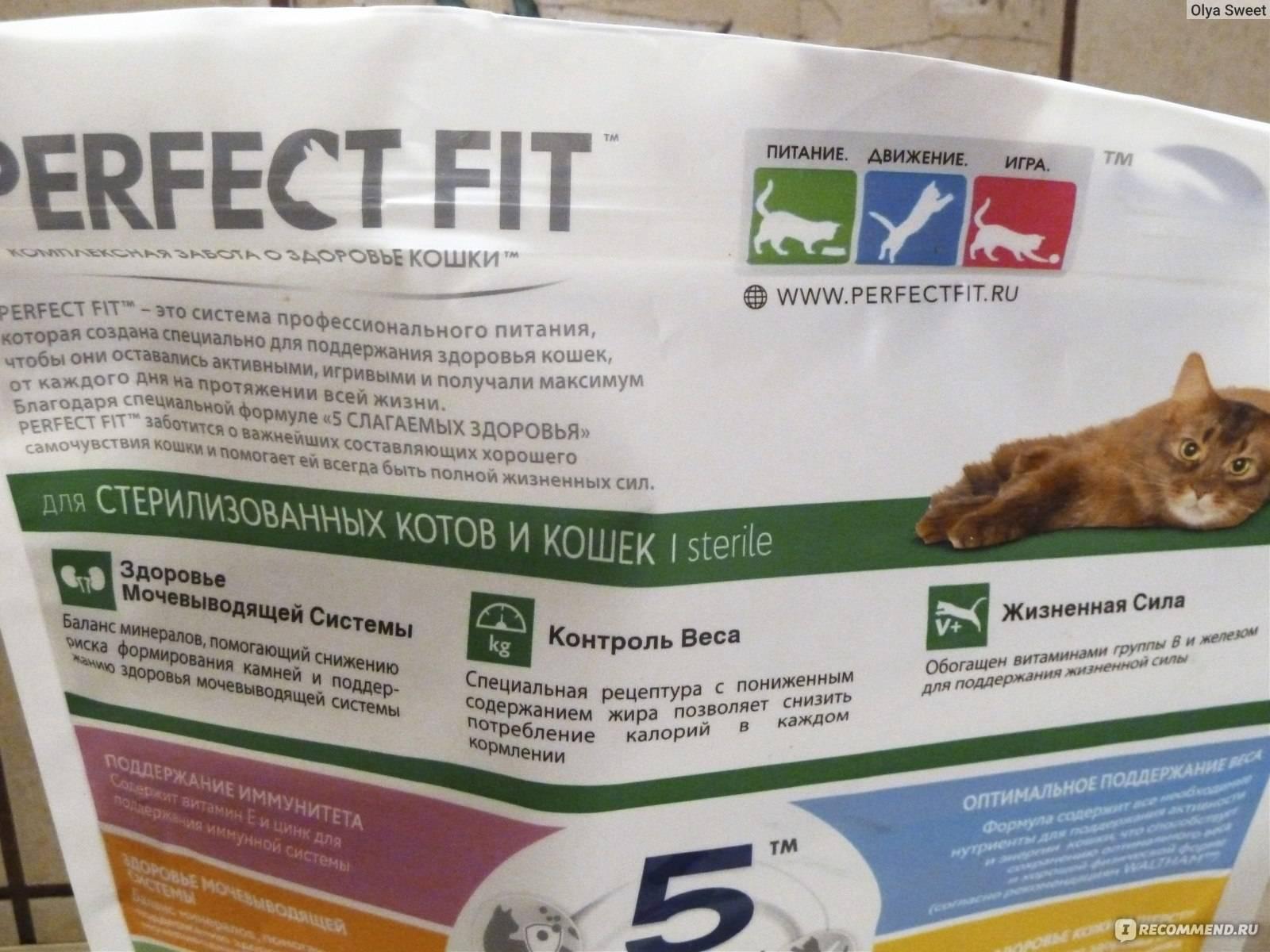 Советы о том, как приучить котенка к сухому корму?