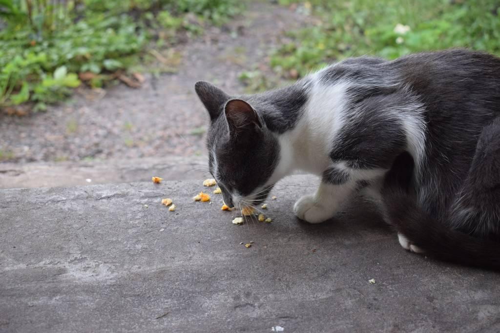 Кота рвет желтой жидкостью: что делать