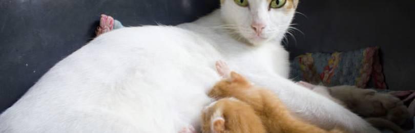 Кошка мяукает сильно роды - кошки и собаки
