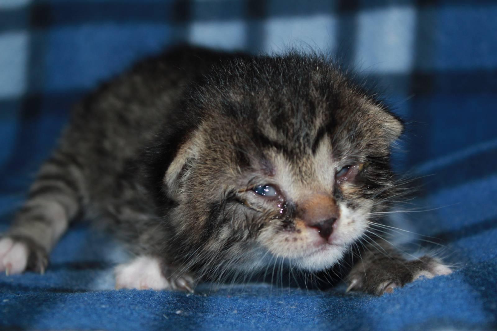 Из-за чего у кошки может не полностью открываться глаз?