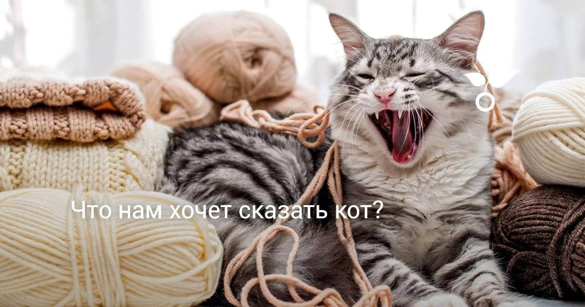 Почему кошка мяукает без причины