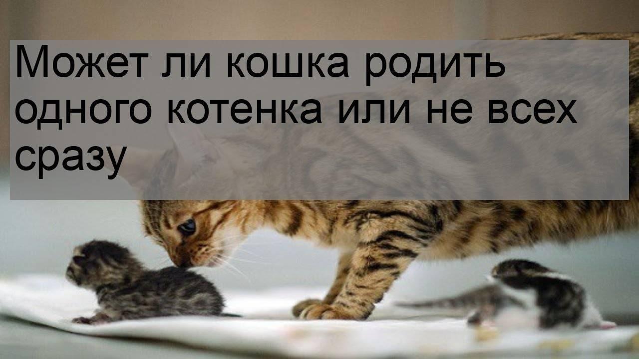 Кошка родила котят в доме: что говорят народные приметы