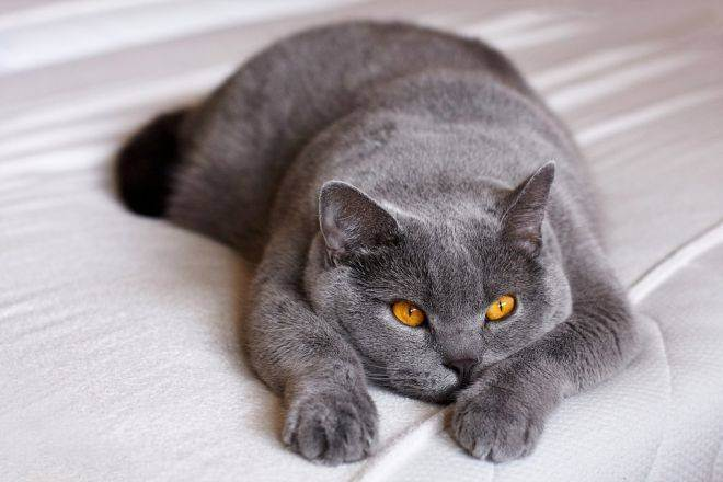 Как правильно определить пол новорожденных котят. как определить пол котенка и отличить мальчика от девочки