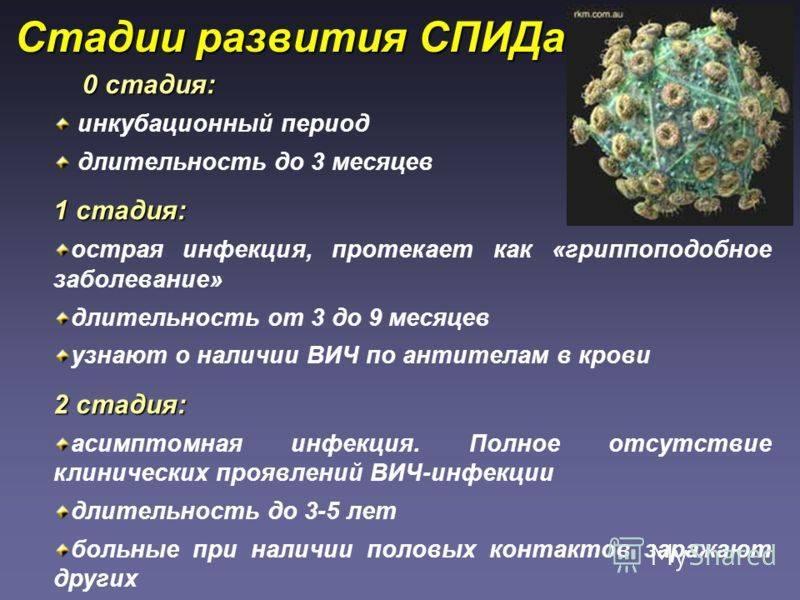 Анализ крови на вирус иммунодефицита у кошек