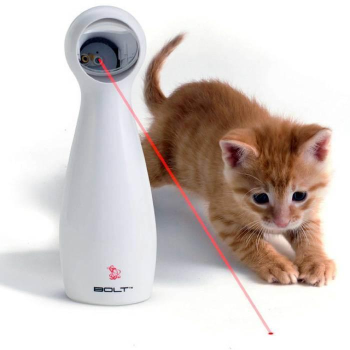 10 полезных советов для котов и их владельцев