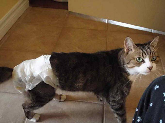 Симптомы и признаки запора у кошек