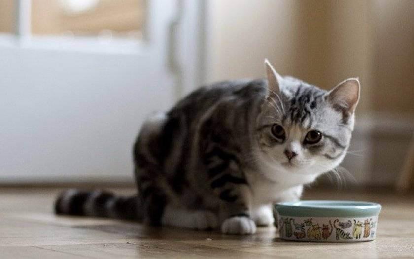 Острый панкреатит симптомы и лечение у кошек
