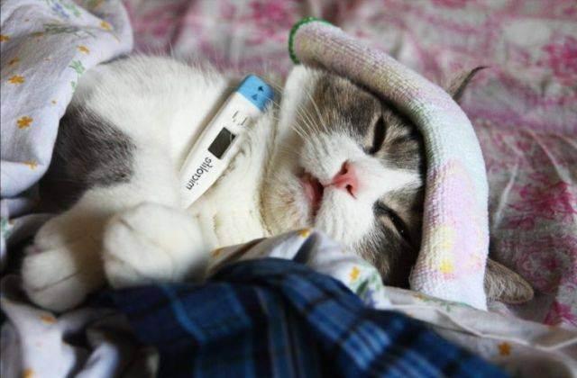Правильная стрижка кота и кошки в домашних условиях