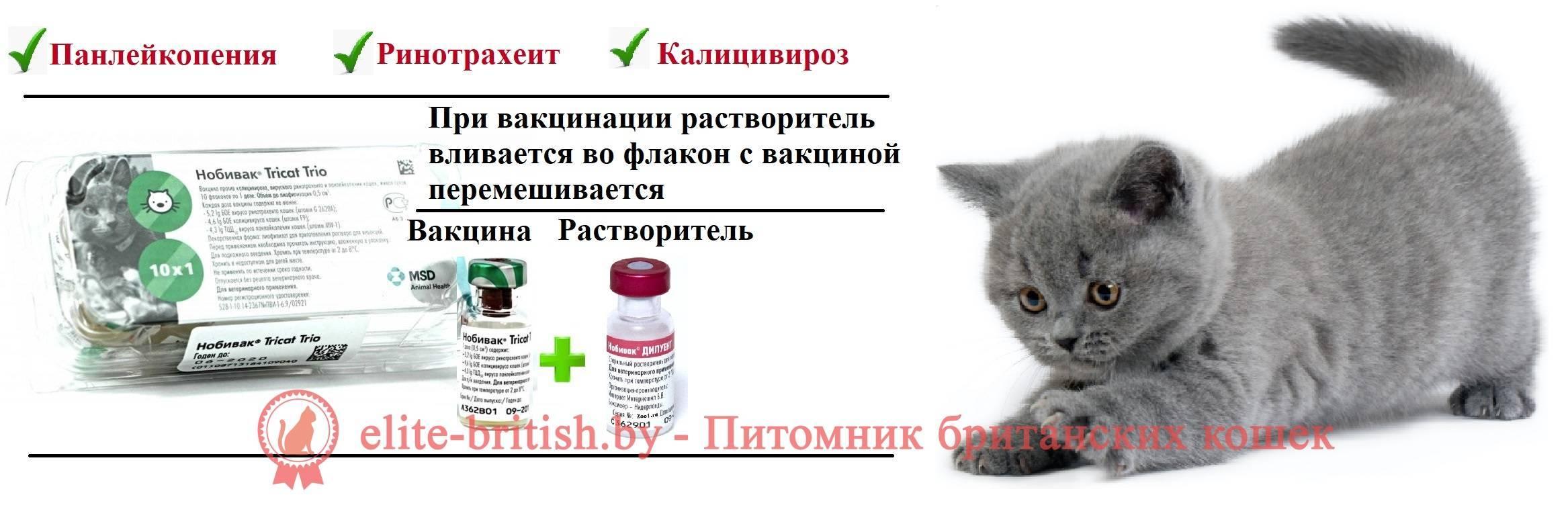 Какие прививки нужно делать котятам?