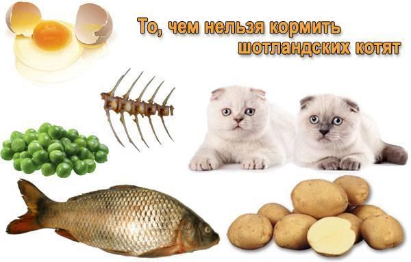 Как и чем кормить кошку?