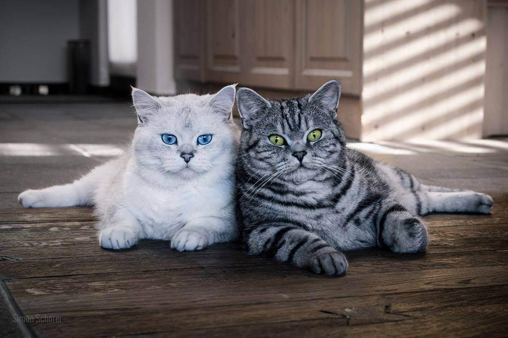 Уживутся ли вместе взрослая кошка и котенок? - запись пользователя ирина (alexooonder) в сообществе домашние животные в категории кошки. болезни, прививки, советы по уходу - babyblog.ru