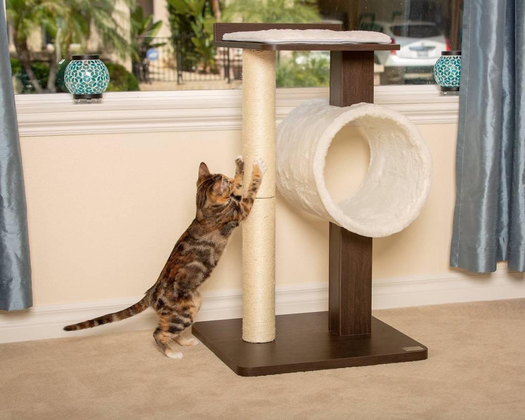 Как приучить кошку к когтеточке в квартире: 7 правил приучения котенка и взрослого кота