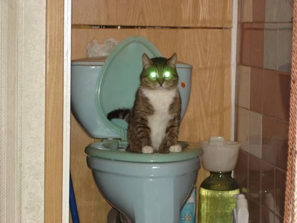 Как заставить кота пописать