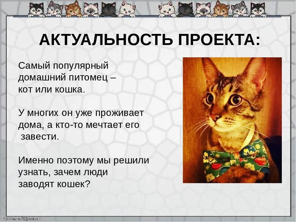 Стоит ли заводить вторую кошку?