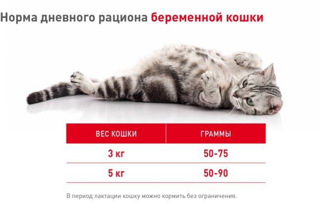 Откармливаем кота так, чтобы он был толстым: большие размеры