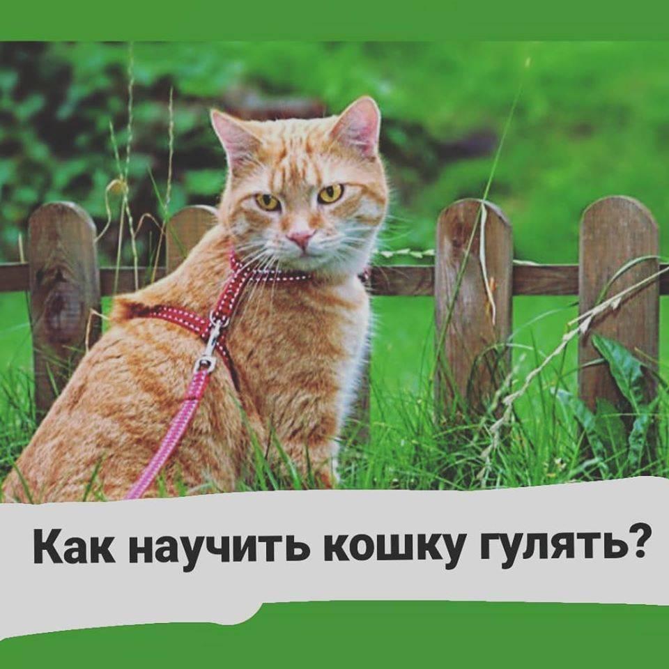 Как успокоить кошку во время течки: лекарства, народные средства