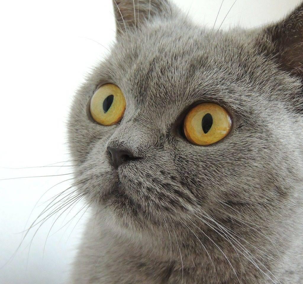 У кошки слезится один глаз: почему животное сильно плачет и как его лечить