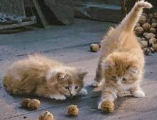 Продукты, вредные для кошек