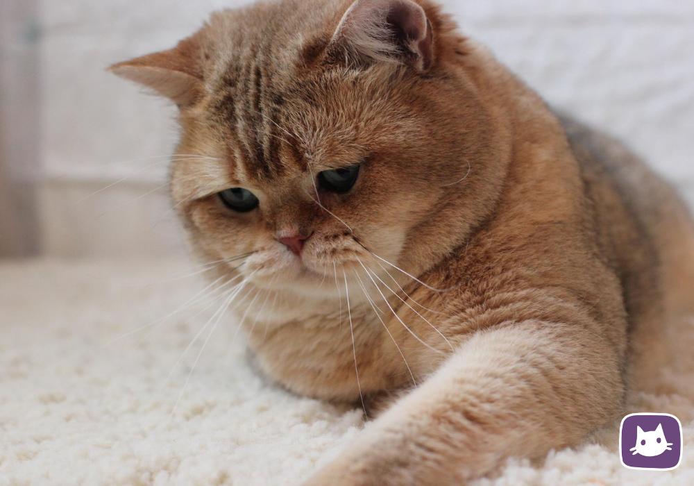 В каком возрасте стерилизуют кошек?