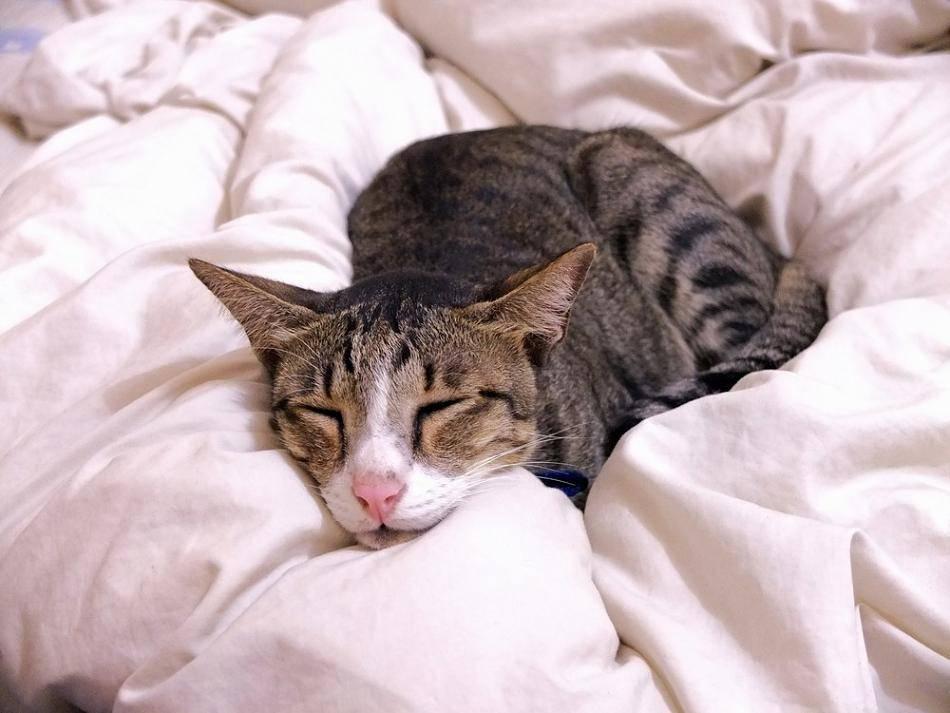 Симптомы и лечение простуды у кошек