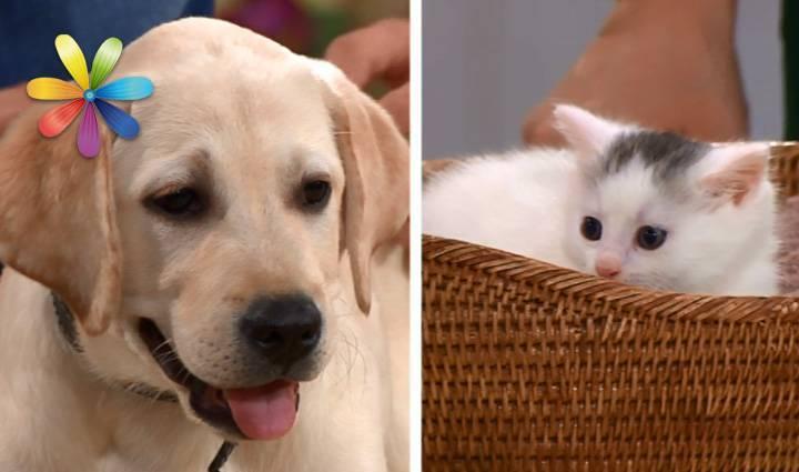 Кто лучше кот или собака: кого завести?   zdavnews.ru